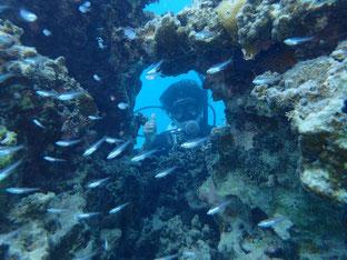 石垣島でのんびりダイビング「石西礁湖へ」ヒートハートクラブ
