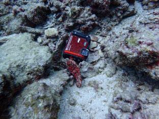 石垣島でのんびりダイビング「迷子のカメラ」ヒートハートクラブ