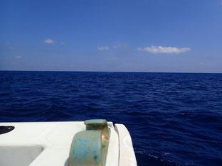 石垣島でのんびりダイビング「早朝便にて」ヒートハートクラブ