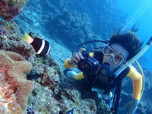 石垣島でのんびりダイビング「水中写真に挑戦」ヒートハートクラブ