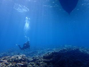 石垣島でのんびりダイビング「ダイビングシーズン到来」ヒートハートクラブ