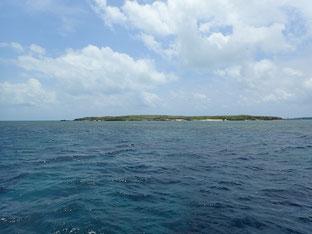 石垣島でのんびりダイビング「揺らめき」ヒートハートクラブ