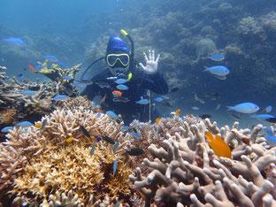 石垣島でのんびりダイビング「名蔵湾」ヒートハートクラブ