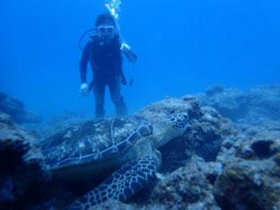 石垣島でのんびりダイビング「強運の持ち主」ヒートハートクラブ