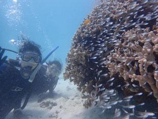 石垣島でのんびりダイビング「体験ダイビング満喫」ヒートハートクラブ