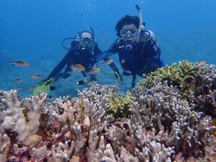 石垣島でのんびりダイビング「水中写真女子」ヒートハートクラブ