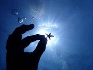 石垣島でのんびりダイビング「太陽に」