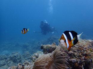 石垣島でのんびりダイビング「水中写真」ヒートハートクラブ