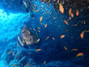 石垣島でのんびりダイビング「満員御礼」ヒートハートクラブ