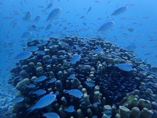 石垣島でのんびりダイビング「時化る前に」ヒートハートクラブ