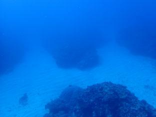 石垣島でのんびりダイビング「M」ヒートハートクラブ