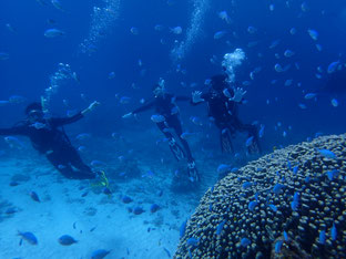 石垣島でのんびりダイビング「癒しの砂地」ヒートハートクラブ