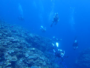 石垣島でのんびりダイビング「マンタは何処へ」ヒートハートクラブ