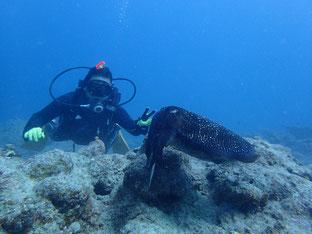 石垣島でのんびりダイビング「コブシメに」ヒートハートクラブ