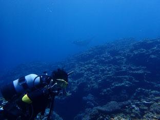石垣島でのんびりダイビング「マンタに遭遇」ヒートハートクラブ