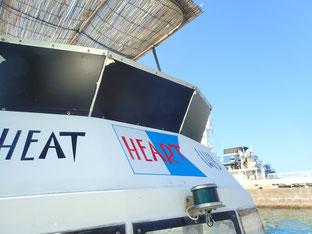 石垣島でのんびりダイビング「マクロ系」ヒートハートクラブ