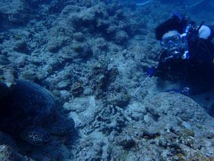 石垣島で初心者ダイビング「ウミガメに遭遇」