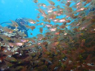 石垣島でのんびりダイビング「フォトダイブ」ヒートハートクラブ