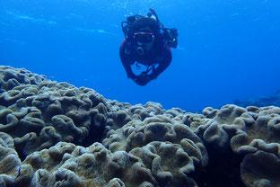 石垣島でのんびりダイビング「安全第一」ヒートハートクラブ
