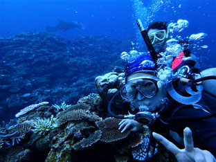 石垣島でのんびりダイビング「マンタの季節」ヒートハートクラブ