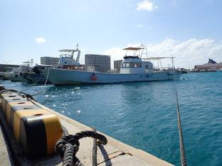 石垣島でのんびりダイビング「ダイビング中止」ヒートハートクラブ