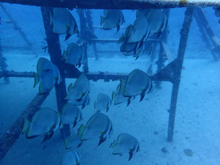 石垣島でのんびりダイビング「辰年つながり」ヒートハートクラブ