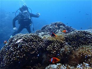石垣島でのんびりダイビング「アオサンゴのお城」ヒートハートクラブ