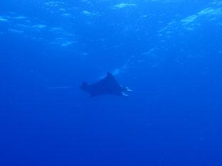 石垣島でのんびりダイビング「ザ・サプライズ」ヒートハートクラブ