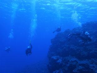 石垣島でのんびりダイビング「台風級」ヒートハートクラブ
