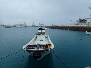 石垣島でのんびりダイビング「さぶ~い~」ヒートハートクラブ