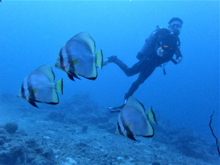 石垣島でのんびりダイビング「てぃーだかんかん」ヒートハートクラブ