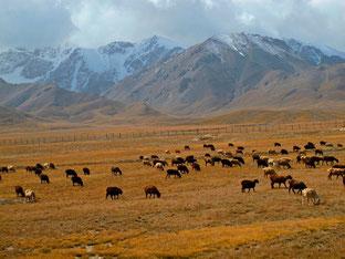 diesseits - auf kirgisischer Seite