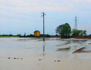Reisfelder in der Nähe von Novara - Po-Ebene