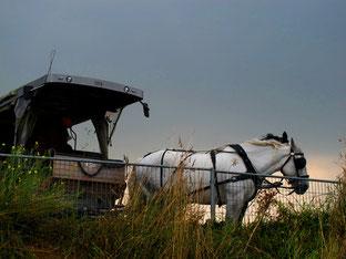 mit der Pferde-Droschke zum Mont Michel