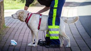 Hund, Geschirr, Leine, Geruchsartikel - schon kann es mit dem Mantrailing losgehen! Auch kleinere Hunderassen wie Parson Russell Terrier sind für das Mantrailing gut geeignet.