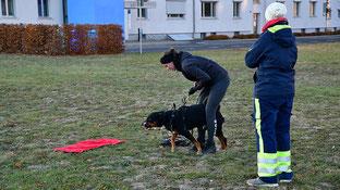 Im Einsatz darf der Geruchsartikel nicht kontaminiert werden.  Impi, eine Kleine Münsterländer-Hündin, bekommt ihn deswegen mit Handschuhen präsentiert.