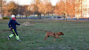 Auch kleinere Hunde wie Lilli, ein Parson Russell Terrier, sind fürs Mantrailing geeignet.