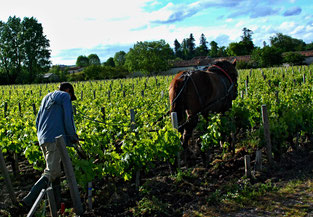 11. Mai 2016 - Arbeit im Rebberg om Bordeaux