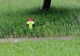 17. Juni 2016 - Ein Männlein steht im Walde auf einem Bein und hat auf seinem Haupte rot Käpplein klein. Sagt, wer mag das Männlein sein, das da steht im Wald allein mit dem kleinen roten Käppelein?