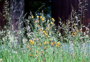 30. Mai 2016 -Naturwiese statt Rasen