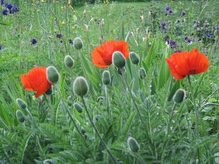 28. Mai 2016 - Den Garten des Paradieses betritt man nicht mit den Füssen, sondern mit dem Herzen (Bernhard von Clairvaux)