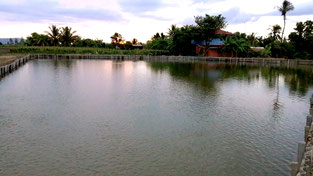 Wang Pa Guesthouse Fishpond