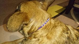 Emma mit ihrem Namenshalsband!