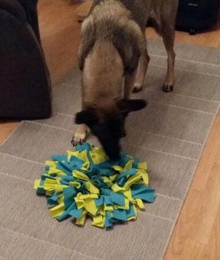 Lola testet ihren Schnüffelteppich!
