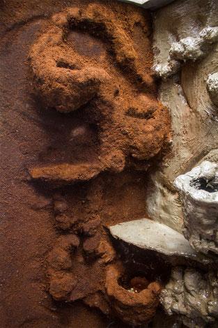 Xaxim Phelsuma grandis grosser madagaskar taggecko Terrarium Rückwand selber bauen