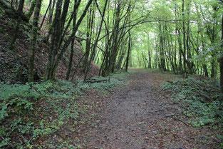 De nouveaux chemins dans la forêt des possibles