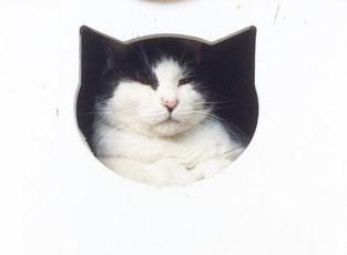 猫と猫ハウス