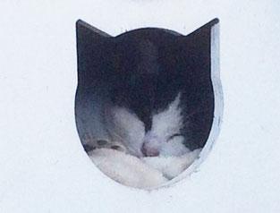 猫ケージで寝る