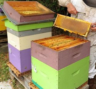 ruche de miel et goûter d'antan en deux-sevres
