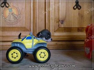 Installations d'élevage : la circulation à contre sens !